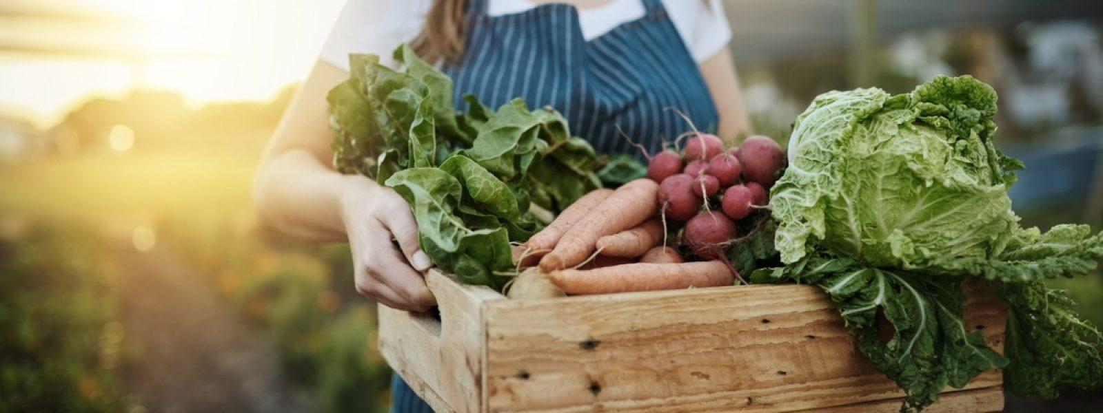 Récolte agriculture bio